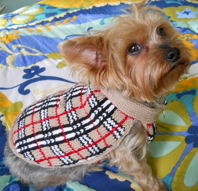 Dog Sweater Knitting Pattern Circular Needle : Patterns for Sale My Savannah Cottage